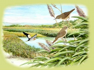 Little Bittern and Reed Warbler are depicted in th...